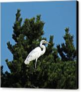 Treed Canvas Print by Chris Anderson
