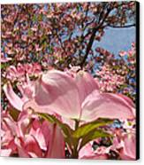 Trees Nature Fine Art Prints Pink Dogwood Flowers Canvas Print by Baslee Troutman