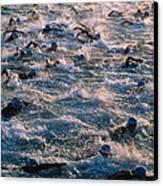 Triathlon Swimmers Canvas Print by G. Brad Lewis