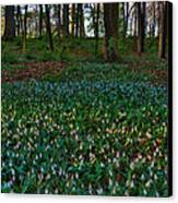 Trout Lilies On Forest Floor Canvas Print by Steve Gadomski