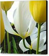 Tulip Flowers Art Prints Yellow White Tulips Floral Canvas Print by Baslee Troutman