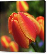 Tulips And Raindrops Canvas Print by colorcarnival (Michelle White)
