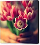 Tulips In Woman Hands Canvas Print by Photo by Ira Heuvelman-Dobrolyubova
