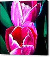 Tulips Canvas Print by Karen Casciani