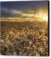Tumble Wheat Canvas Print by Debra and Dave Vanderlaan