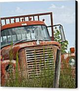 Turned Out To Pasture Canvas Print by Wilma  Birdwell