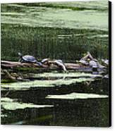 Turtles On Log Scarboro Pond#1  Canvas Print by Gordon Gaul