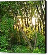 Twilight In The Woods Canvas Print by Anna Villarreal Garbis