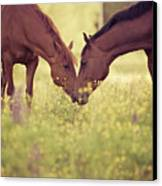 Two Horses In Field Canvas Print by Stefan Sager