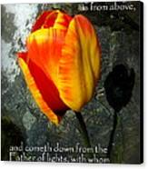 Two Tulips Shadow Scripture Canvas Print by Cindy Wright