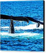 Two Whale Tails Canvas Print by Paul Ge