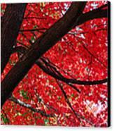 Under The Reds Canvas Print by Rachel Cohen