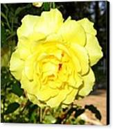 Upbeat Yellow Rose Canvas Print by Will Borden