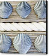Usa, New York State, New York City, Brooklyn, Collection Of Seashells Canvas Print by Jamie Grill