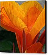 Vibrant Canna Canvas Print by Susan Herber