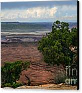 View Of Canyonland Canvas Print by Robert Bales
