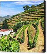 Vineyard Landscape Canvas Print by Carlos Caetano