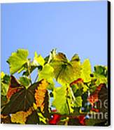 Vineyard Leaves Canvas Print by Carlos Caetano