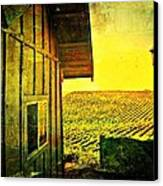 Vineyard Reflection Canvas Print by Kevin Moore