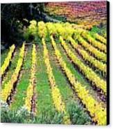 Vineyard Sonoma 7 Canvas Print by Anthony George