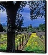 Vineyard View Canvas Print by Kathy Yates