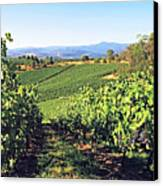 Vineyards In The Yarra Valley, Victoria, Australia Canvas Print by Peter Walton Photography