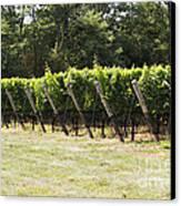 Vineyards Canvas Print by Leslie Leda