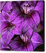 Violet Glads Canvas Print by Susan Herber