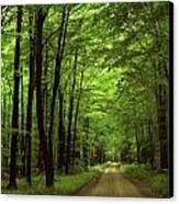 Walking Away Forest Path  Canvas Print by ilendra Vyas
