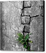 Wall Ferns Canvas Print by Perry Webster