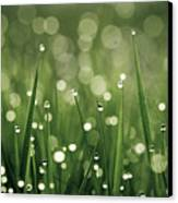Water Drops On Grass Canvas Print by Florence Barreau