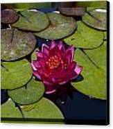 Water Lilly 4 Canvas Print by Charles Warren
