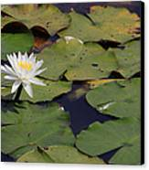 Water Lilly Canvas Print by Forest Alan Lee