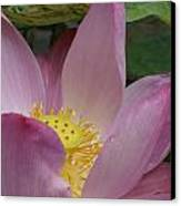 Water Lily Shower Head Canvas Print by Gregory Smith