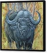 Waterbuffalo Canvas Print by Tod Locke