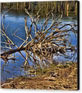 Waterlogged Tree Canvas Print by Douglas Barnard