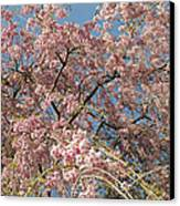 Weeping Cherry Tree In Bloom Canvas Print by Todd Gipstein