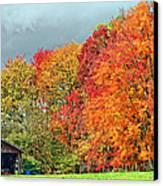 West Virginia Maples 2 Canvas Print by Steve Harrington