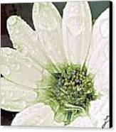 Wet Petals Canvas Print by Artist and Photographer Laura Wrede