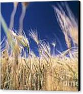 Wheat Field Canvas Print by Juan  Silva