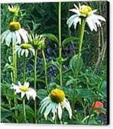 White Daisies And Garden Flowers Canvas Print by Thelma Harcum