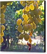 White Grapes Canvas Print by Barbara McMahon