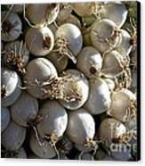 White Onions Canvas Print by Susan Herber