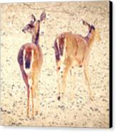 White Tails In The Snow Canvas Print by Amy Tyler