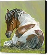 Who You Lookin At Canvas Print by Bev Lewis