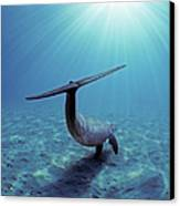 Wild Bottlenose Dolphin Canvas Print by Jeff Rotman and Photo Researchers