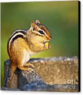 Wild Chipmunk  Canvas Print by Elena Elisseeva