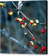 Wild Red Berries Out Of The Shell Canvas Print by LeeAnn McLaneGoetz McLaneGoetzStudioLLCcom