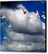 Wind Sailing Seagulls Canvas Print by Vicki Ferrari