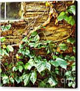 Window And Grapevines Canvas Print by HD Connelly